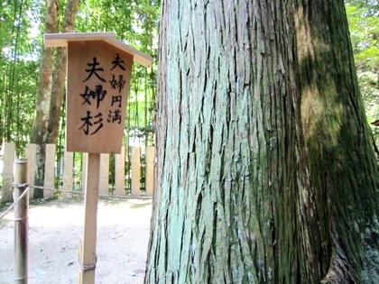 夫婦杉 奈良の等彌神社